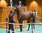 Hip no. 104, a  War Front filly out of Hostess, is sold at the Fasig-Tipton Yearling Sales for $570,000 to Glen Hill Farm on August 10, 2015 at the Fasig-Tipton Sales Pavilion in Saratoga Springs, New York. (Bob Mayberger/Eclipse Sportswire)