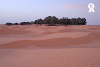 Tunisia, Ksar Ghilane, sand dunes at Sahara Desert, oasis in background, dusk (Licence this image exclusively with Getty: http://www.gettyimages.com/detail/sb10065145bt-001 )
