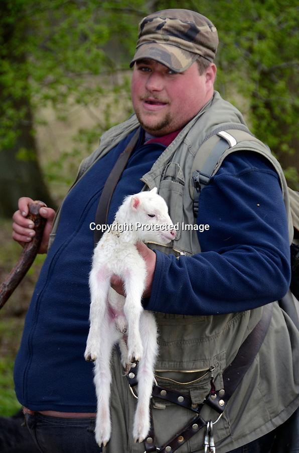 Schaefer Benjamin Heinz im Naturschutzgebiet Boberg mit frisch geboren Schaf.
