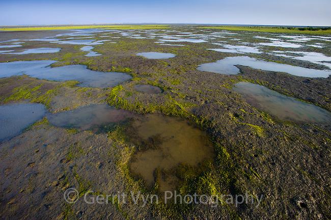 Tidal flat habitat of the Spoon-billed Sandpiper on Nan Thar Island. Rakhine State, Myanmar. January.