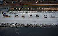 Rookie Musher Philip Walters runs his team down Fourth Avenue at the ceremonial start of the 43rd Iditarod dog sled race in downtown Anchorage. 79 mushers made their way 11 miles through the slushy streets of Anchorage in unseasonably warm weather and early rain. This year's official re-start will begin in Fairbanks because of poor trail conditions in Southcentral Alaska.