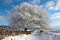 Tree coated in hoar frost near Eyam. Peak District National Park, Derbyshire, UK. December.