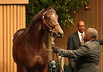 12 September 2010.  Hip #96 Giant's Causeway--Spunoutacontrol colt sold for $950,000 at the Keeneland September Yearling Sale.  Consigned by Lane's End.