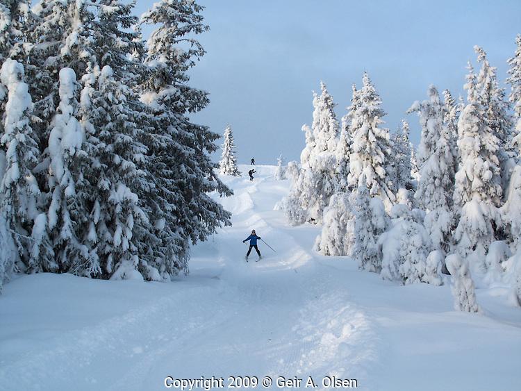 Winter at Venabygdsfjell, close to Ringebu in the Norwegian mountains