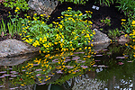 Liverwort plants reflected in man made pond, Boothbay, Maine