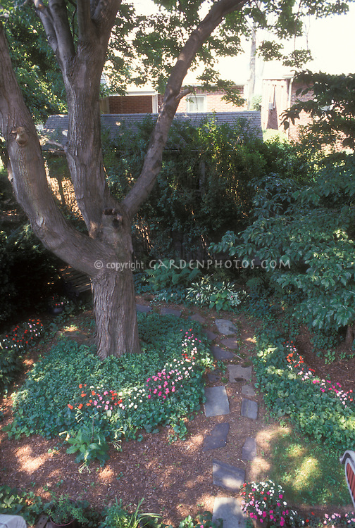Dense shade of Norway maple Acer platanoides in backyard, viewed from above, with pachysandra, hosta, viola, flagstone walk, impatiens in hidden runner boxes, Cornus florida dogwood at right