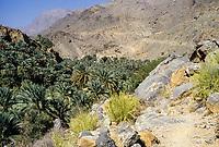Wadi Bani Kharus, Oman.  Looking down on Date Palms above the Village of al-Ulya.