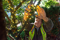 Jake Rogers of Fayetteville wraps holiday lights around a tree Tuesday Oct. 12, 2021 on the Fayetteville square. Rogers works for Fayetteville Parks and Recreation. The lights will be turned on Nov. 20. and will illuminate the square each evening from 5:00 p.m. to 1:00 a.m. The city uses more than 400,000 lights. The lights remain on through December 31. Visit nwaonline.com/210001013Daily/  (NWA Democrat-Gazette/J.T. Wampler)