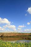 Israel, Sharon region, a rain pool in an ancient quarry by Nahal Poleg