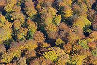 Herbstwald:DEUTSCHLAND, SCHLESWIG- HOLSTEIN 30.10.2005:Sachsenwald,  Laubbaeume, Herbst, Laubfaerbung