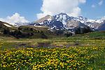 CHE, Schweiz, Kanton Bern, Berner Oberland, Grindelwald: Grosse Scheidegg (1.961 m): zwischen Grindelwald und dem Rosenlauital, mit Schwarzhorn (2.928 m) | CHE, Switzerland, Canton Bern, Bernese Oberland, Grindelwald: Grosse Scheidegg (1.961 m): between Grindelwald and Rosenlaui Valley, with Schwarzhorn mountain (2.928 m)