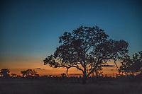 Africa, Botswana, Okavango Delta, Khwai private reserve, tree at sunset.