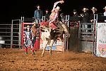 SEBRA - Delta, PA - 10.4.2014 - Bulls & Action