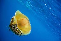 Deep Blue: Underwater & Marine World/Monde Marin et Sous-Marin