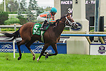 Conquest Typhoon(5) with Jockey Patrick Husbands aboard runs to a win at the Summer Stakes at Woodbine Race Course in Toronto, Canada on September 13, 2014.