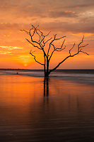 The sun rises over a lone dead oak tree on the beach in Botany Bay Plantation WMA on Edisto Island, South Carolina.