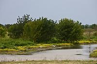 Europe/France/Aquitaine/33/Gironde/Env de Blaye: L'Ile Nouvelle sur l'Estuaire de la Gironde,
