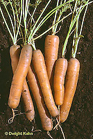 HS12-005c  Carrot - Clarion variety