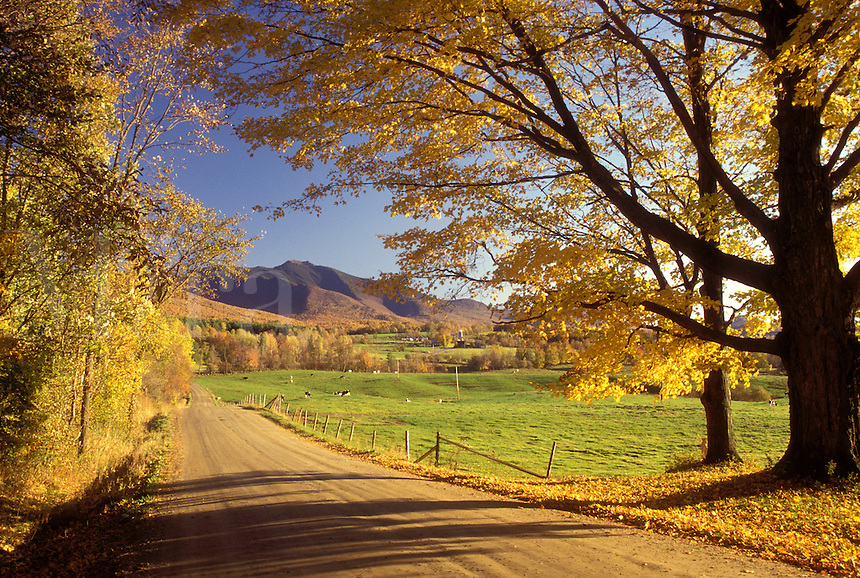AJ1041, Vermont, fall, road, Fall foliage along country road in Pleasant Valley in Cambridge. Scenic view of Mt. Mansfield.