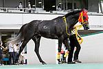 KITAKYUSHU,JAPAN-AUG 15: Mozu Nagareboshi after winning the Kokura Kinen at Kokura Racecourse on August 15,2021 in Kitakyushu,Fukuoka,Japan. Kaz Ishida/Eclipse Sportswire/CSM