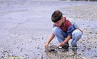 1Y47-385x  Horseshoe Crab - boy returning horseshoe crab to ocean -  Limulus polyphemus