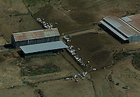 aerial photograph cattle Sonoma County, California