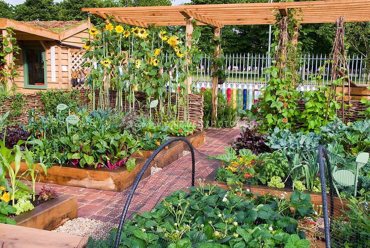 Raised bed vegetable garden with fruit strawberries, sunflowers, climbing scarlet runner beans vines, house, trellis, protection netting, corn, chard, sunny day