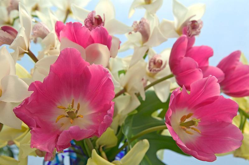 Tulip and orchid arrangement