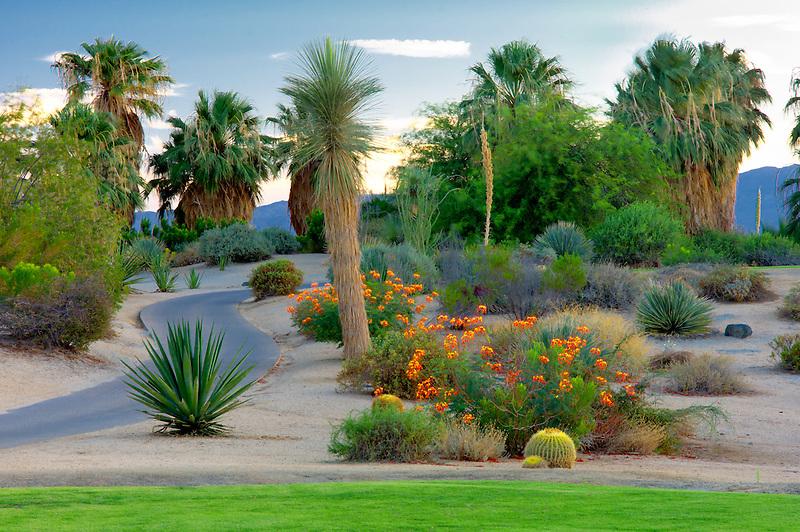 Landscaping around Desert Willow Golf Resort. Palm Desert, California