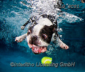 REALISTIC ANIMALS, REALISTISCHE TIERE, ANIMALES REALISTICOS, dogs, paintings+++++SethC_320B0415rev,USLGSC01,#A#, EVERYDAY ,underwater dogs,photos,fotos ,Seth