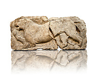 "Lion from the ""Satyr Hunting Wils Animals, freezes, 460 B.C. From Xanthos, UNESCO World Heritage site, south west Turkey. A British Museum exhibit GR 1848-10-20-2-9 (sculpture B 2902- 298)."