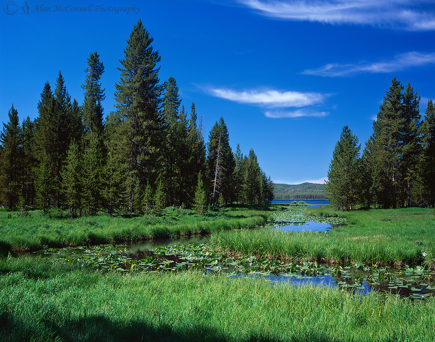 """""""DeLacy's Discovery""""<br /> DeLacy Creek / Shoshone Lake<br />  2014<br /> <br /> A three-mile hike takes you to where DeLacy Creek flows into Shoshone Lake.  The creek was named after Walter DeLacy, who was leading an expedition in 1863 from Jackson Hole.  He discovered Shoshone Lake, but didn't publish his discoveries until 1876, which kept him from receiving credit for being the man who discovered Yellowstone.  Later, the beautiful stream was named in his honor.<br /> <br /> 4 x 5 Large Format Film<br /> Velvia 50"""