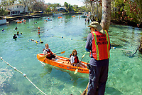 Florida Manatee, Trichechus manatus latirostris, A manatee watch volunteer monitors snorkeler's and kayaker's behavior making sure they follow laws and guidlines governing proper manatee interaction at the Three Sisters Sanctuary. Crystal River, Florida. No MR