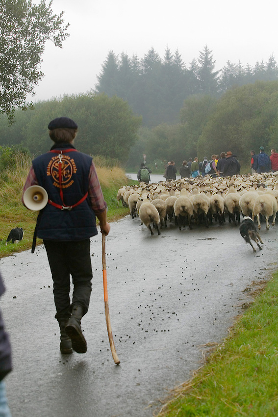 Retour de transhumance a Saint-Rivoal depuis le mont Saint-Michel, en 2009