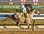 NEW YORK, NY - FEB 04: El Areeb #4, ridden by Trevor McCarthy, wins the Withers Stakes on Withers Stakes Day at Aqueduct Racetrack on February 4, 2017 in the Ozone Park neighborhood of New York, New York. (Photo by Sue Kawczynski/Eclipse Sportswire/Getty Images)