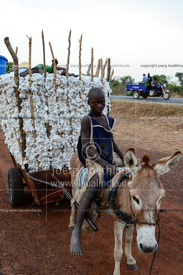 BURKINA FASO, village Soumousso, cotton harvest, children transport harvested cotton with donkey cart to their village, on the road chinese three-wheeler Apsonic  / Baumwolle Ernte, Kinder transportieren Baumwolle mit einem Eselkarren vom Feld in ihr Dorf, Hintergrund chinesisches Lastendreirad Apsonic