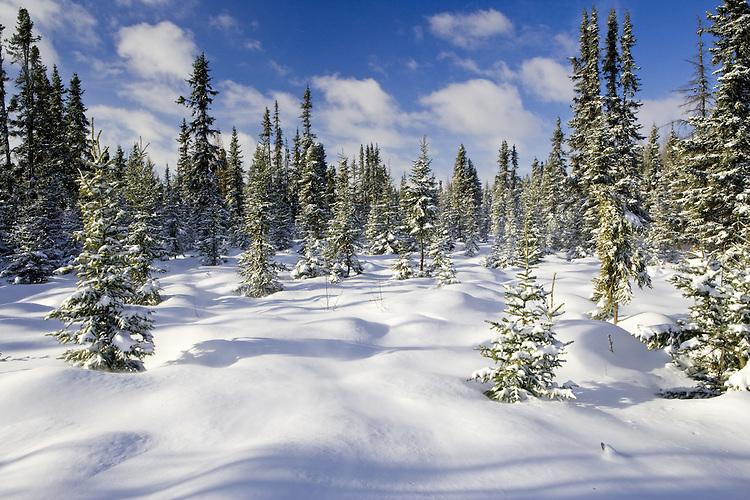 Morning following a snow storm at Elk Island Park