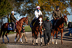 November 3, 2020: Tiz The Law, trained by trainer Barclay Tagg, exercises in preparation for the Breeders' Cup Classic at  Keeneland Racetrack in Lexington, Kentucky on November 3, 2020. Alex Evers/Eclipse Sportswire/Breeders Cup