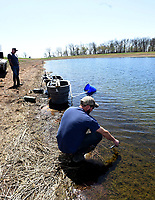 Hatchery workers, including manager Joe Adams (right), transfer walleye fry into a pond at the hatchery. The walleye will grow into fingerlings about two inches long. Then they'll be transported and stocked at Beaver and other lakes.<br />(NWA Democrat-Gazette/Flip Putthoff)