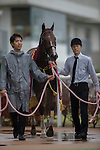 NOV 14,2015:Air Spinel ,ridden by Yutaka Take,wins the Daily Hai Nisai Stakes at Kyoto in Kyoto,Japan. Kazushi Ishida/ESW/CSM