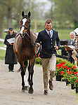 LEXINGTON, KY - APRIL 27: #3 Steady Eddie and rider Boyd Martin, jog before the vets and grand jury during the first horse inspection for the Rolex Three Day Event on Wednesday April 27, 2016 in Lexington, Kentucky. (Photo by Candice Chavez/Eclipse Sportswire/Getty Images)
