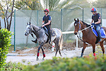 March 25, 2021: Al Quoz Sprint contender Speak In Colours (GB) trains on the track for trainer Joseph P. O'Brien at Meydan Racecourse, Dubai, UAE. Shamela Hanley/Eclipse Sportswire/CSM