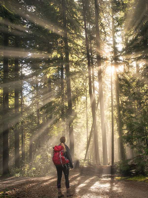 Road/trail and hiker along Opal Creek with sunburst/godrays. Opal Creek Wilderness, Oregon