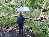 20160514_Fallen Tree at Travis Brown's home