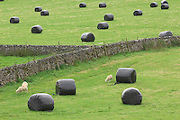 Big bale silage and stone walls, Slaidburn, Lancashire.