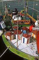 Europe/Chypre/Paphos: Pêcheur préparant ses filets sur le port de pêche