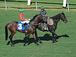 October 9, 2010.Blue Chagall riden by David Flores approaching the gate for The Oak Tree Mile at Hollywood Park, Inglewood, CA._Cynthia Lum/Eclipse Sportswire.com