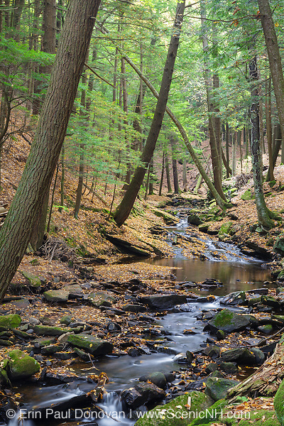 Wilde Brook in Chesterfield Gorge Natural Area of Chesterfield, New Hampshire USA during the autumn months