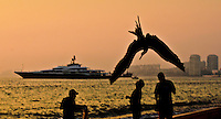 Fine Art Print, Photograph of the Attessa IV and a Magnificent FrigateBird diving over the heads of the Fishermen in Puerto Vallarta, Mexico.