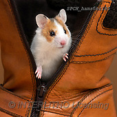 Xavier, ANIMALS, REALISTISCHE TIERE, ANIMALES REALISTICOS, photos+++++,SPCHHAMSTER185,#A#, EVERYDAY ,funny